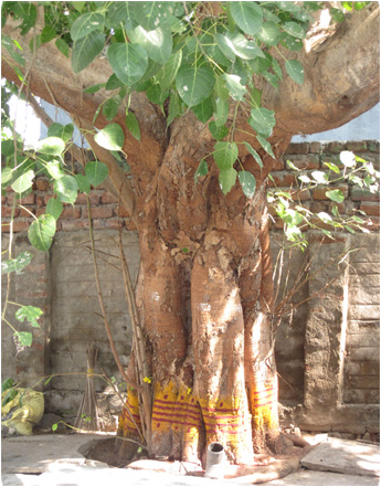 Kalamkari Tree of Life